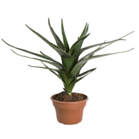 Plante artificielle, agave vert 27''