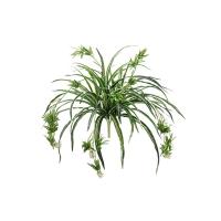 34'' Spider plant
