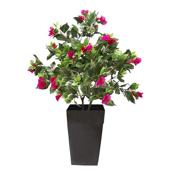 Plante exterieure bien plantes en pot pour exterieur for Plante pour exterieur en pot