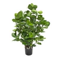 Plante artificielle, clusia 31'