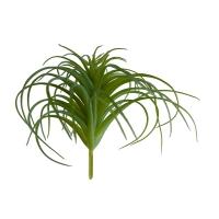 Plante d'air 6''