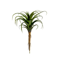 8,5'' Air plant, tillandsia