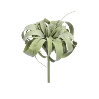 9'' Air plant, green and grey tillandsia