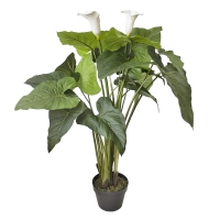 47'' Outdoor lilly calla plant