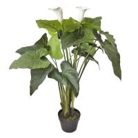 Plante de calla lily extérieur 47''