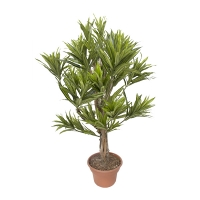 3' Artificial lime green dracaena tree