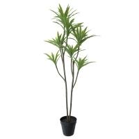 Plante dracaena en pot noir 63''