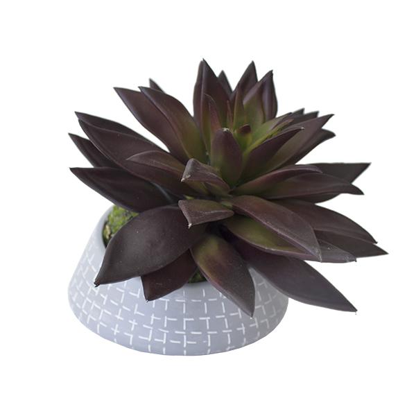 Plante grasse en pot d cors v ronneau for Plantes soldes