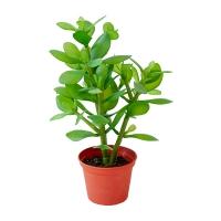 Plante de jade artificielle, 13''