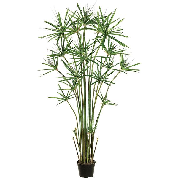 Plante de papyrus en pot 5 39 plantes et d cors v ronneau for Plantes interieures