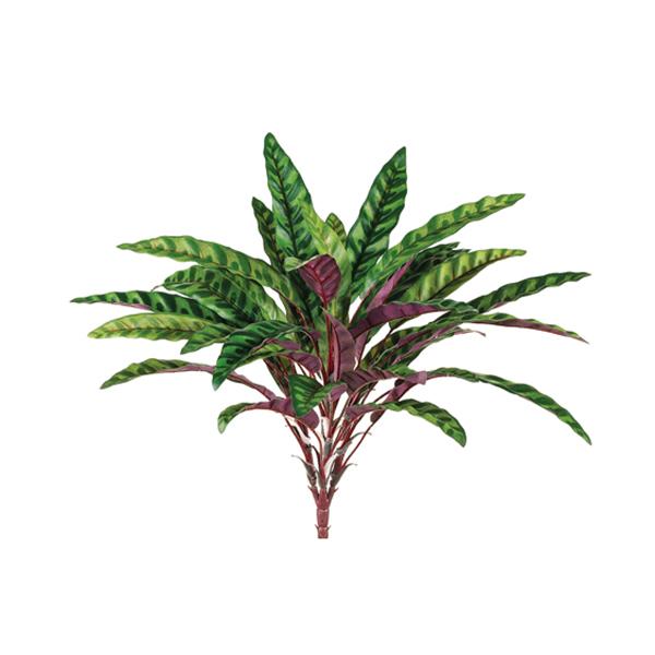 Plante 39 39 peacock 39 39 18 5 39 39 d cors v ronneau for Plantes soldes