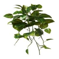 24'' Pothos bush