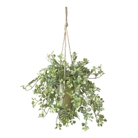 Green plant golden hanging planter