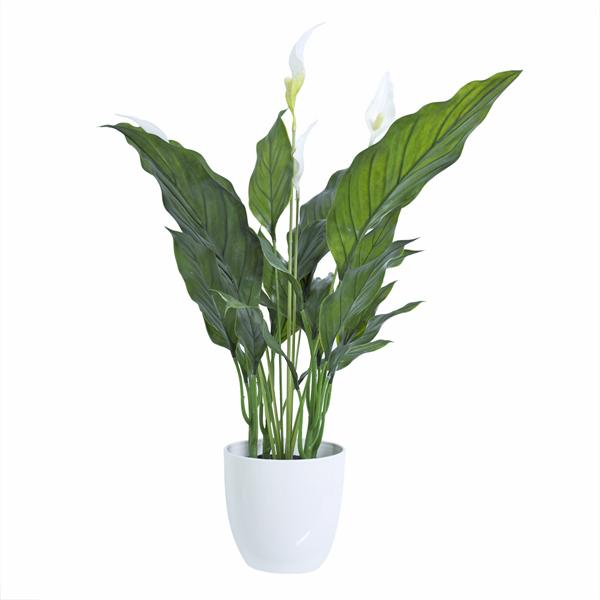 plante spathiphyllum en pot blanc 19 plantes et d 233 cors