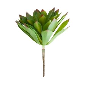 Plante succulente 9''