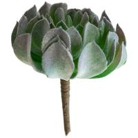 Plante grasse vert de gris 6''
