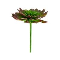 Plante succulente verte et bourgogne 8''