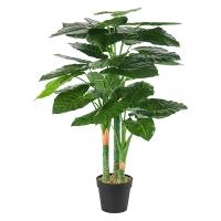 Plante Taro, 48''