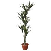 Plante artificielle, yucca 6'