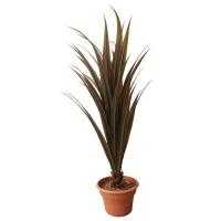 Plante artificielle, yucca brun 53''