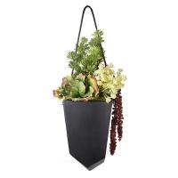 Plantes grasses dans pot suspendu 11 x 26''