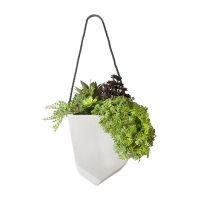 Plantes grasses dans pot suspendu 14 x 24''