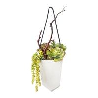 Plantes grasses dans pot suspendu 8 x 27''
