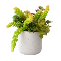 Plantes grasses en pot