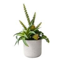 Plantes grasses, en pot