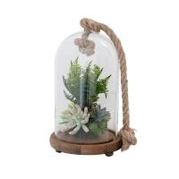 Fougère et plantes grasses sous cloche