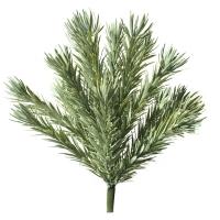 Podocarpus vert gris 42F/17''