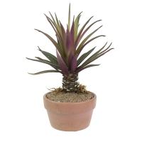 Pot de plantes grasses bourgognes en plastique 5-9''