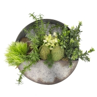 Arrangement de plantes grasses, pot mural