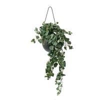 Dark Ivy in Suspended Planter