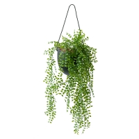 Small Cascading Foliage in Hanging Planter