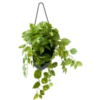 Pothos artificiel, pot suspendu