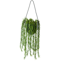 Cascading Rosemary in Suspended Planter