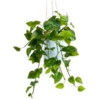 Artificial Pothos In Hanging Planter, 25x16''