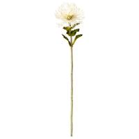 White Protea, 26''