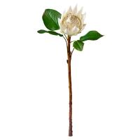 White King Protea, 22''