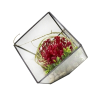 Red protea in geometric glass vase