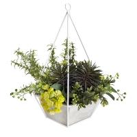 Pyramide de plantes grasses