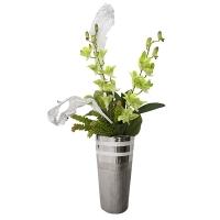 Rencontre d'orchidées