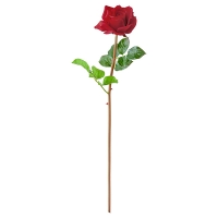 Rose rouge ouverte sur tige 26''