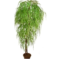 7' Artificial tree, weeping willow