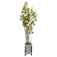 Smoke tree de 6' en pot