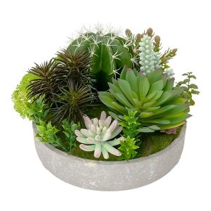 Soucoupe de plantes grasses et cactus