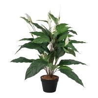 Plante spathiphyllum 35''