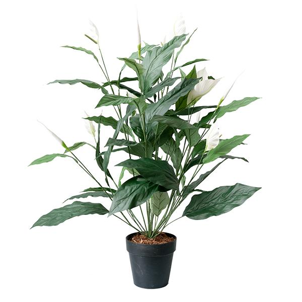 Spathiphyllum 42 5 39 39 d cors v ronneau for Soldes plantes vertes