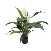 Plante artificielle, spathiphyllum 25''